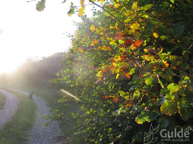 Efterårs farver - fra efterårs foto turen