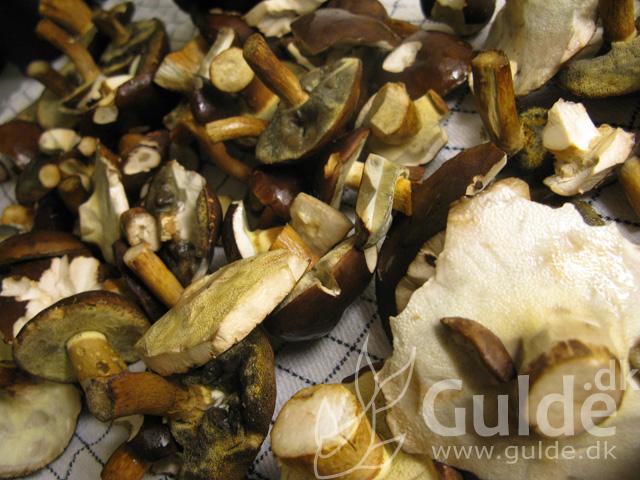 Bemærk hvordan særligt svampen i nedderste venstre hjørne er fyldt med Gulde's fedtede fingeraftryk, der ses som mørkere pletter... thats it!