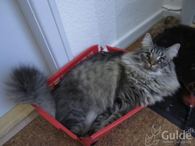 Fluffy i sin kasse... bare større...