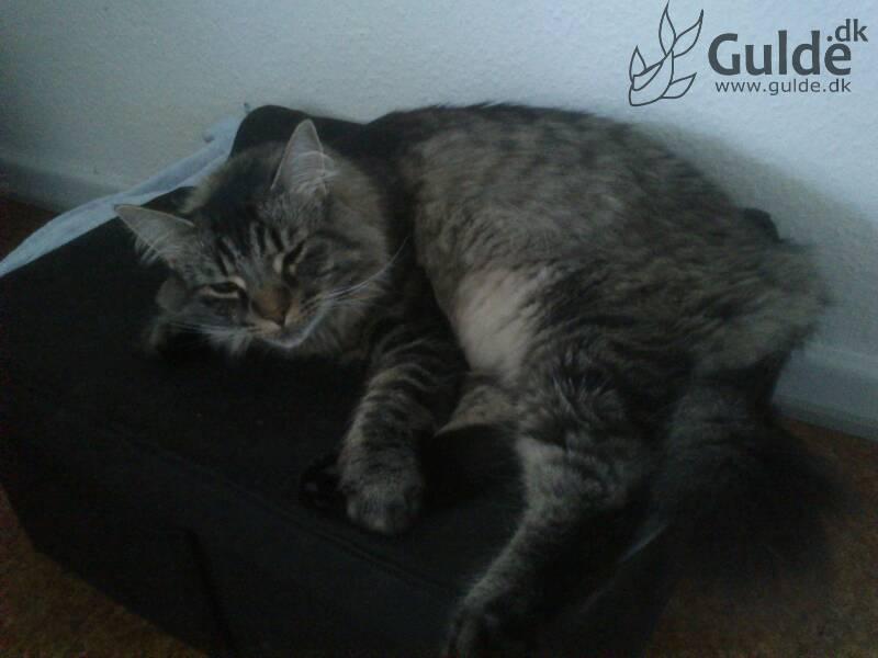 Fluffy er glad og tilfreds med at have sin 'mor' hjemme igen ^^