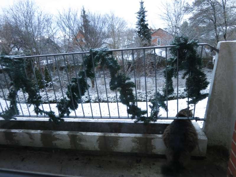 Fluffy beundre den nye sne