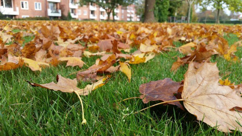 An Autumn Tag