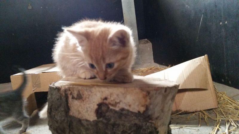 Katteskruk pt. 3