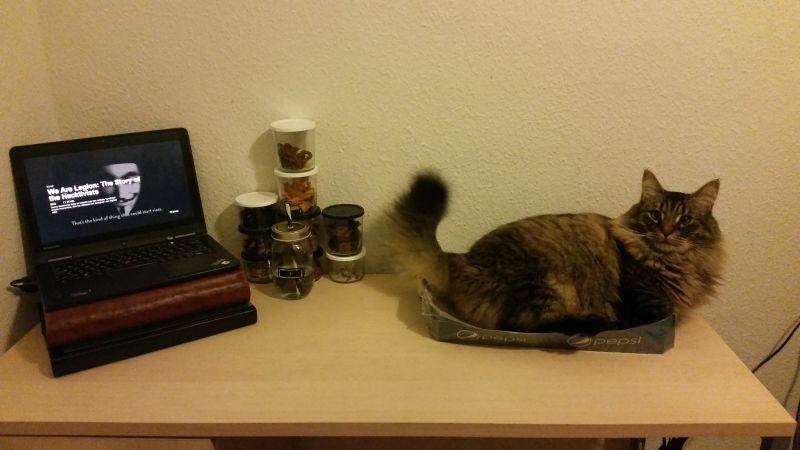 Fluffy kat afgør hurtigt at have større vigtighed en computere og gaming!