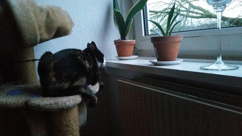 Poor mistreated kitty