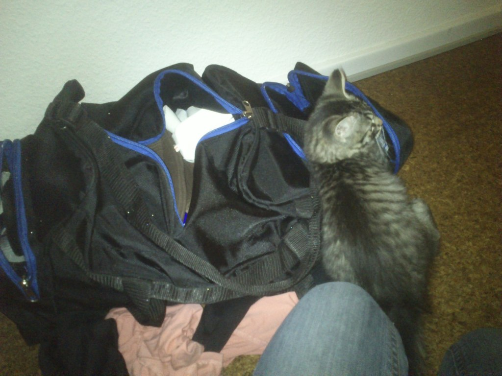 Fluffy hjælper med at pakke stævne-tasken