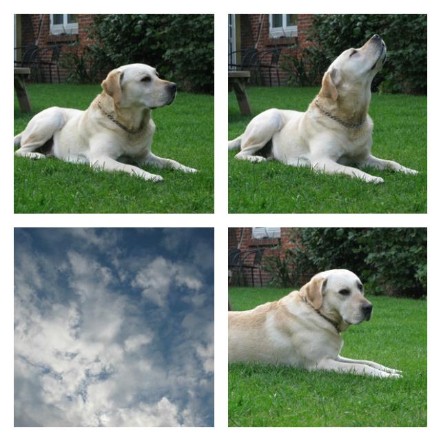 Himmel-hunden Valde